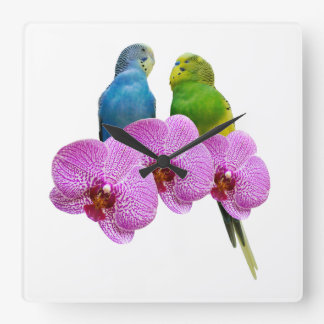 Budgie mit lila Orchidee Quadratische Wanduhr