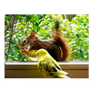 Budgie und rotes Eichhörnchen Postkarte