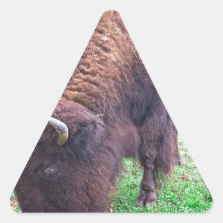 Büffel Dreieckiger Aufkleber