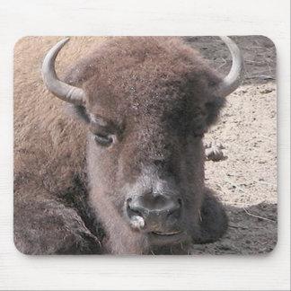 Büffel-Foto Mousepad