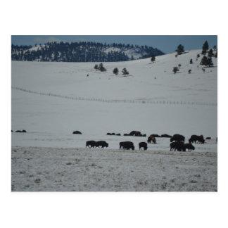 Büffel im Schnee bedeckte Tal mit Bergen Postkarte