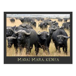 Büffel-Kenia-Postkarte Masai-Maras afrikanische Postkarte