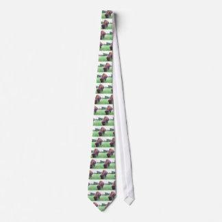 Büffel Krawatte