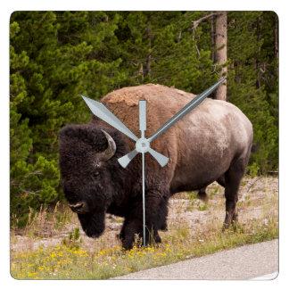 Büffel-oder Bison-Wanduhr Quadratische Wanduhr