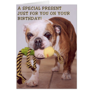 Bull dog birthday card