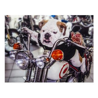 Bulldogge auf Motorrad Postkarte