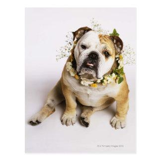 Bulldogge mit Blumenkragen Postkarten
