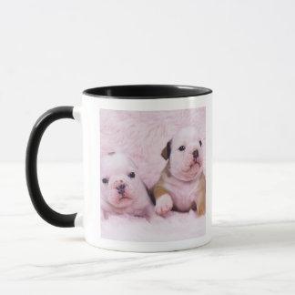 Bulldogge; nannte häufig die englische Bulldogge. Tasse