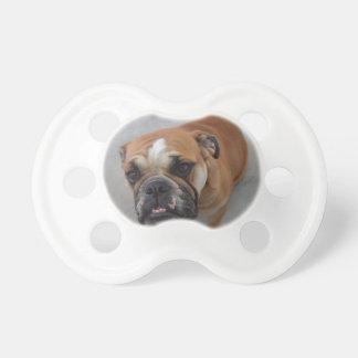 Bulldogge Schnuller