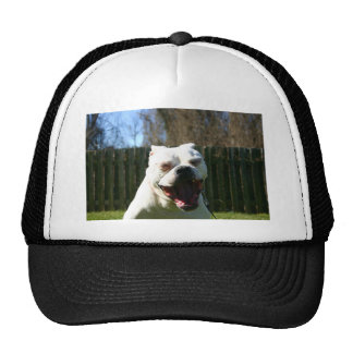 Bulldoggen-Gegähne Kult Mützen