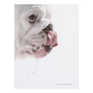 Bulldoggen-Lecken Postkarte