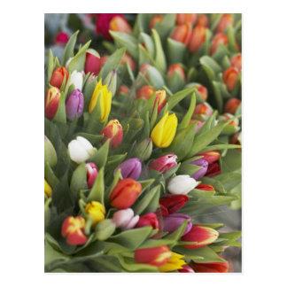 Bündel der bunten Tulpen Postkarte