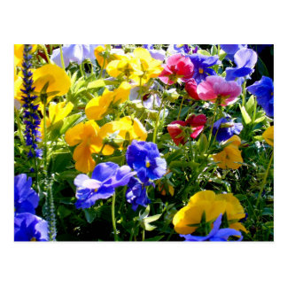 Bunte Blumen-Postkarte Postkarte
