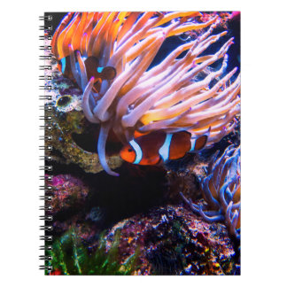 Bunte Clown-Fische Notizblock
