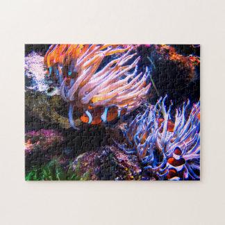 Bunte Clown-Fische Puzzle