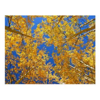 Bunte Colorado-Espen… Postkarte
