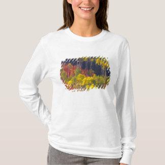 Bunte Espen in Logan-Schlucht Utah in T-Shirt