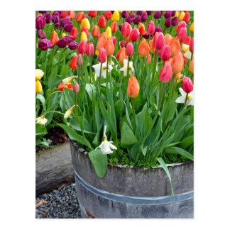 Bunte Frühlingstulpepflanzer-Druckpostkarte Postkarte