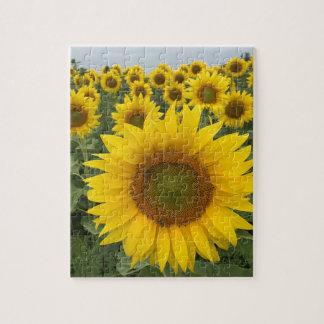 Bunte gelbe Sonnenblume-mit Blumenernte Puzzle