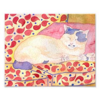 Bunte Katze auf Sofa-Kunst-Druck Kunstfoto