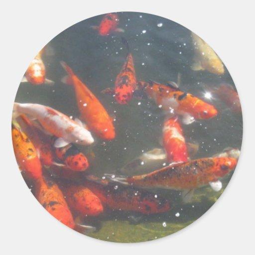 Bunte koi fische in einem teich runder aufkleber zazzle for Koi und goldfische in einem teich