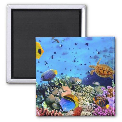 Bunte Korallenriff-Lebewesen Kühlschrankmagnete