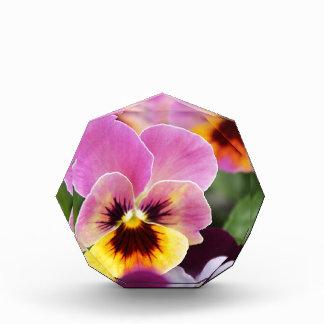 Bunte rosa und gelbe Pansy-Blume Acryl Auszeichnung