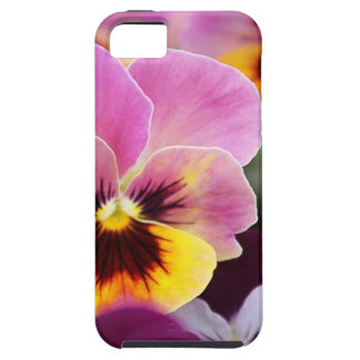 Bunte rosa und gelbe Pansy-Blume Tough iPhone 5 Hülle