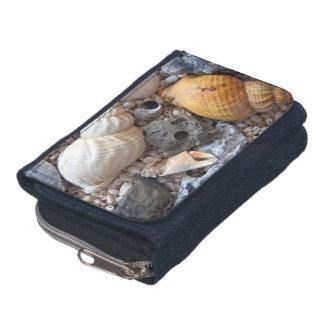 Bunte Seashells