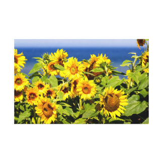 Bunte Sonnenblume in der Blüte Leinwanddruck