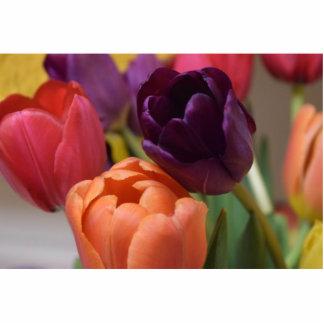 Bunte Tulpen Acryl Ausschnitte