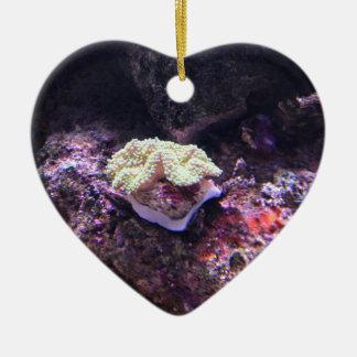 Bunte weiche Koralle und Livefelsen Keramik Ornament