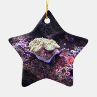 Bunte weiche Koralle und Livefelsen Keramik Stern-Ornament