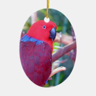 Bunter eclectus Papagei Keramik Ornament