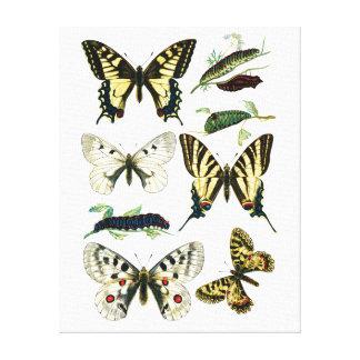 Bunter Frack-Schmetterling, Raupe u. Motte Leinwanddruck