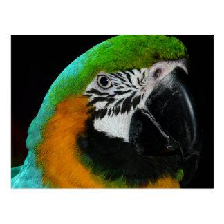 Bunter grüner Papagei Postkarte