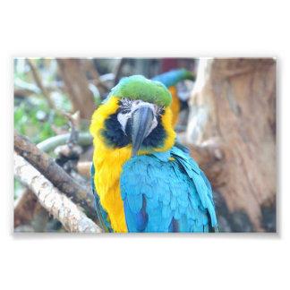 Bunter Papagei - Foto-Druck