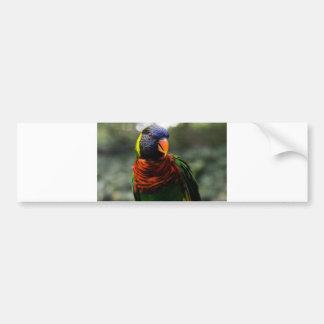Bunter Parakeet-Tassen-Schuss Auto Aufkleber