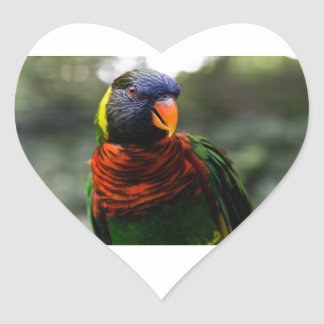 Bunter Parakeet-Tassen-Schuss Herz Aufkleber