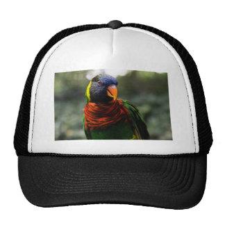 Bunter Parakeet-Tassen-Schuss Mütze