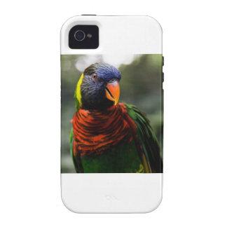 Bunter Parakeet-Tassen-Schuss Vibe iPhone 4 Cover