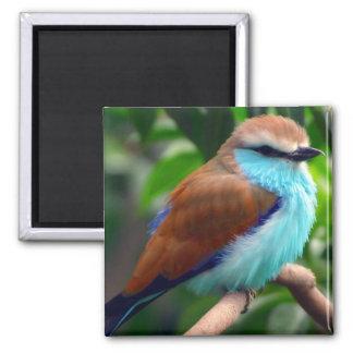 Bunter Vogel Quadratischer Magnet