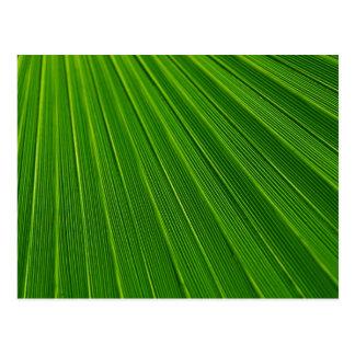 Buntes abstraktes grünes Palmblatt Postkarte