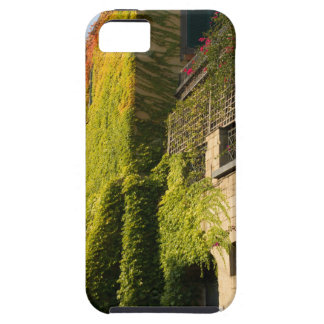 Buntes Blätter auf Hauswänden iPhone 5 Hülle