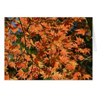 Buntes Blätter des japanischen Ahorns Karte