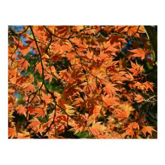 Buntes Blätter des japanischen Ahorns Postkarte