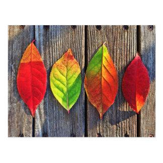 Buntes Blätter Postkarte