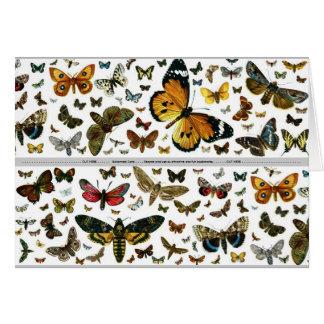 Buntes Schmetterlingeantiquarian-Bild-Lesezeichen Karte