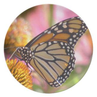 Buntglas-Flügel Melaminteller