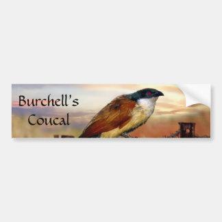 Burchells Coucal Kuckuckvogel Autoaufkleber
